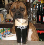Kate! That's my Guinness!!